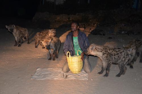 bb Hyena Man