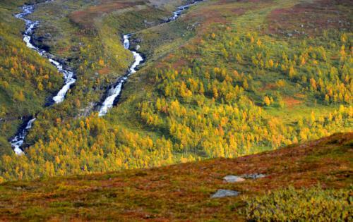 c Autumn Rivers