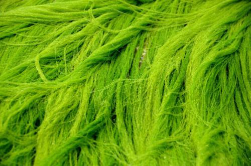 l Green hair