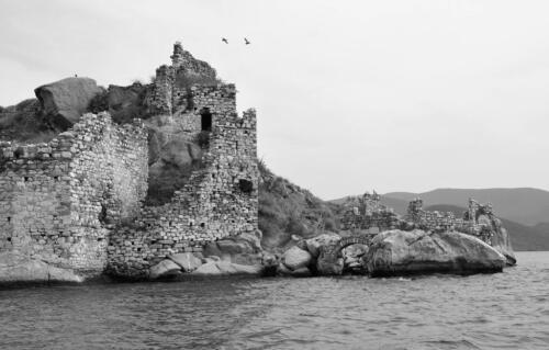 mm Forgotten Island